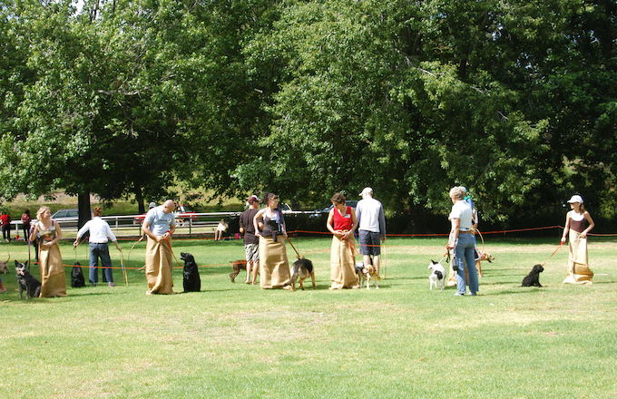 Dog Club Fun Day Sack Race