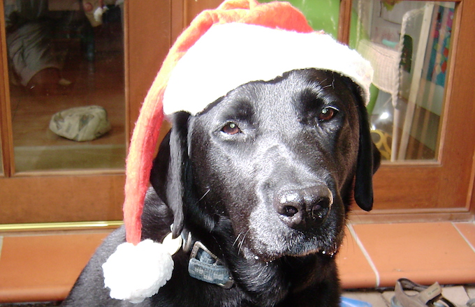 Harry the Xmas (& Beyond) Dog